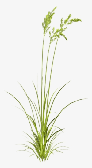 Patch of dirt in tall grass clipart picture library library Grass PNG, Transparent Grass PNG Image Free Download - PNGkey picture library library