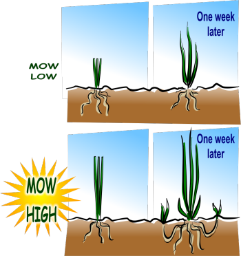 Patch of dirt in tall grass clipart picture stock Lawn care for the cheap and lazy. Read it and follow the ... picture stock