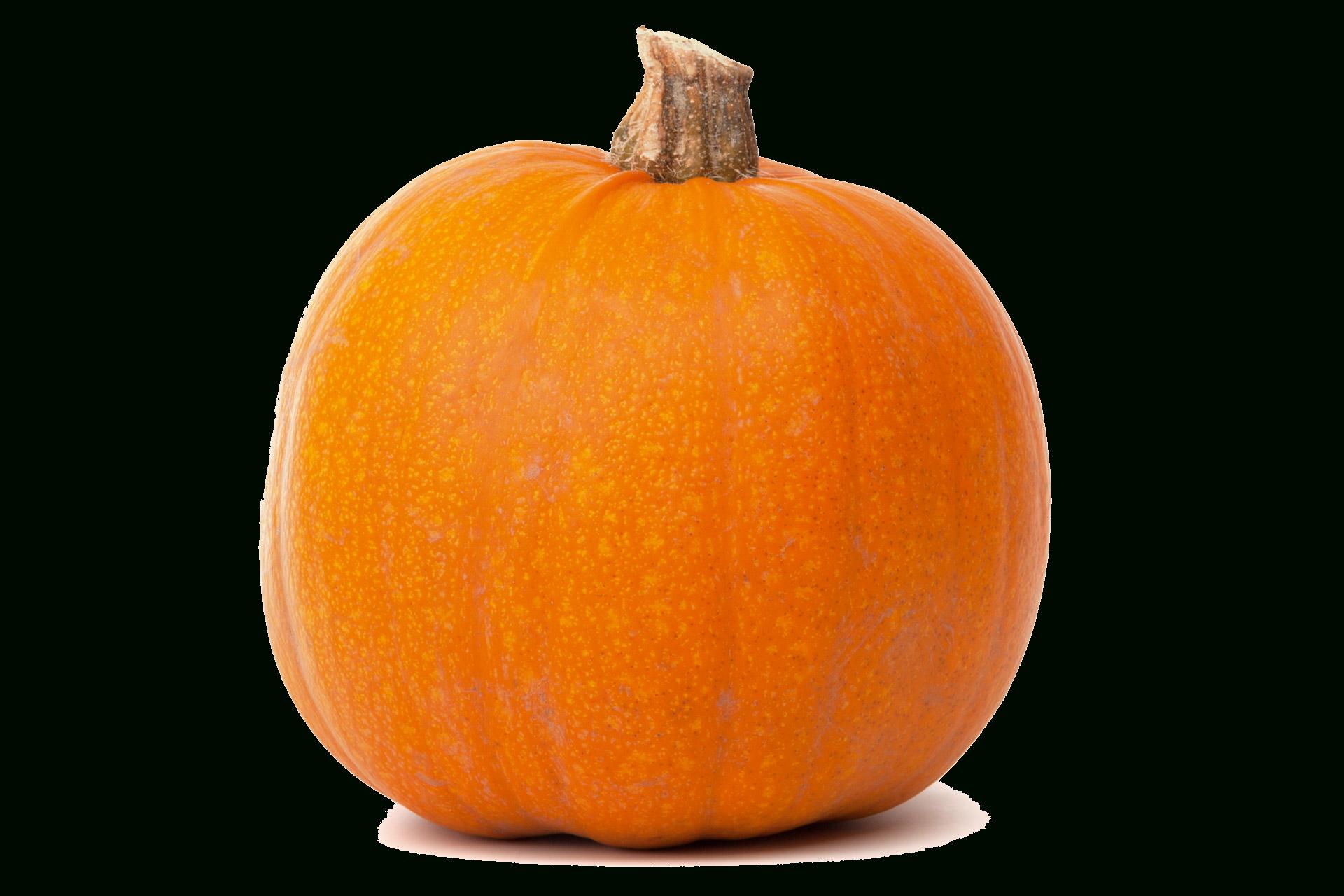 Pumpkin clipart black background vector Pumpkin Transparent Background | cyberuse vector