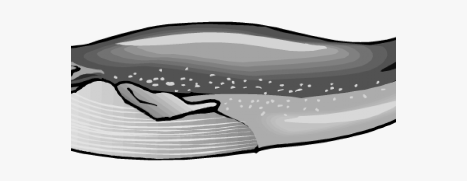 Pattern of whales black and whilte clipart png freeuse stock Blue Whale Clipart Black And White - Blue Whale Clipart ... png freeuse stock