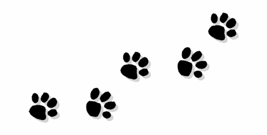 Pawprint clipart picture download Pawprint Clipart Trail - Transparent Paw Print Clipart ... picture download