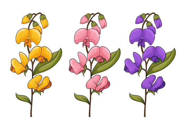 Pea flower clipart transparent Sweet Pea Flower Vectors - Download Free Vectors, Clipart ... transparent