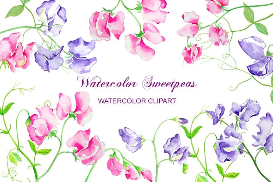 Pea flower clipart vector transparent download Watercolor Sweet Pea Flowers vector transparent download