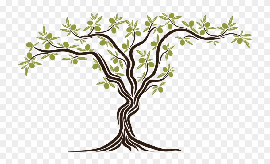Peace tree clipart png transparent from The Seed An Olive Tree Sprouted, Simbol Of Peace ... png transparent