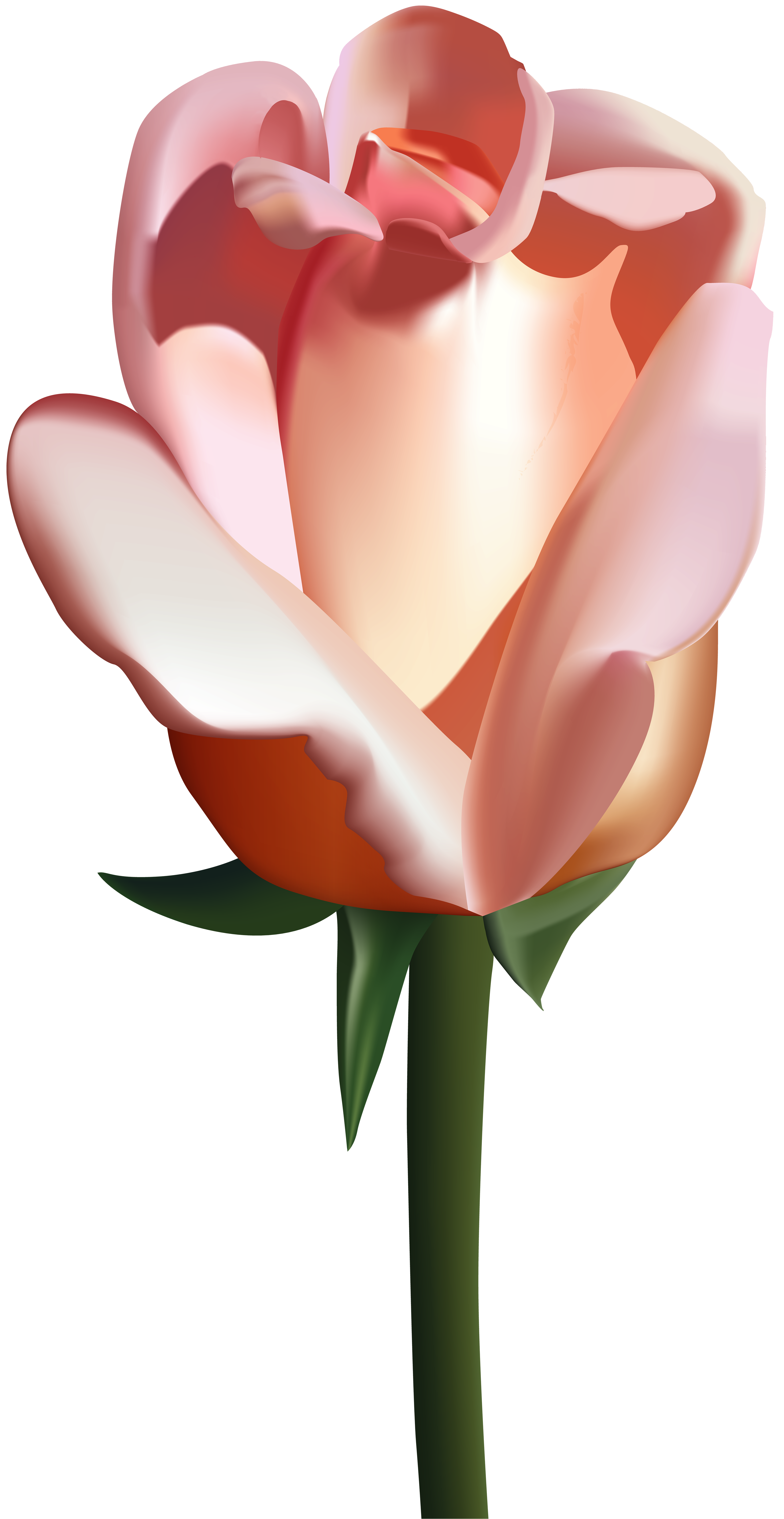 Peach flower clipart png black and white stock Peach Rose PNG Clip Art Image | Gallery Yopriceville - High-Quality ... png black and white stock