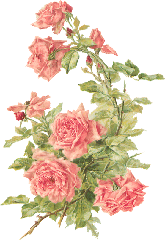 Peach flower clipart vector transparent download Catherine Klein – Peach Roses Digital Elements | Pinterest ... vector transparent download