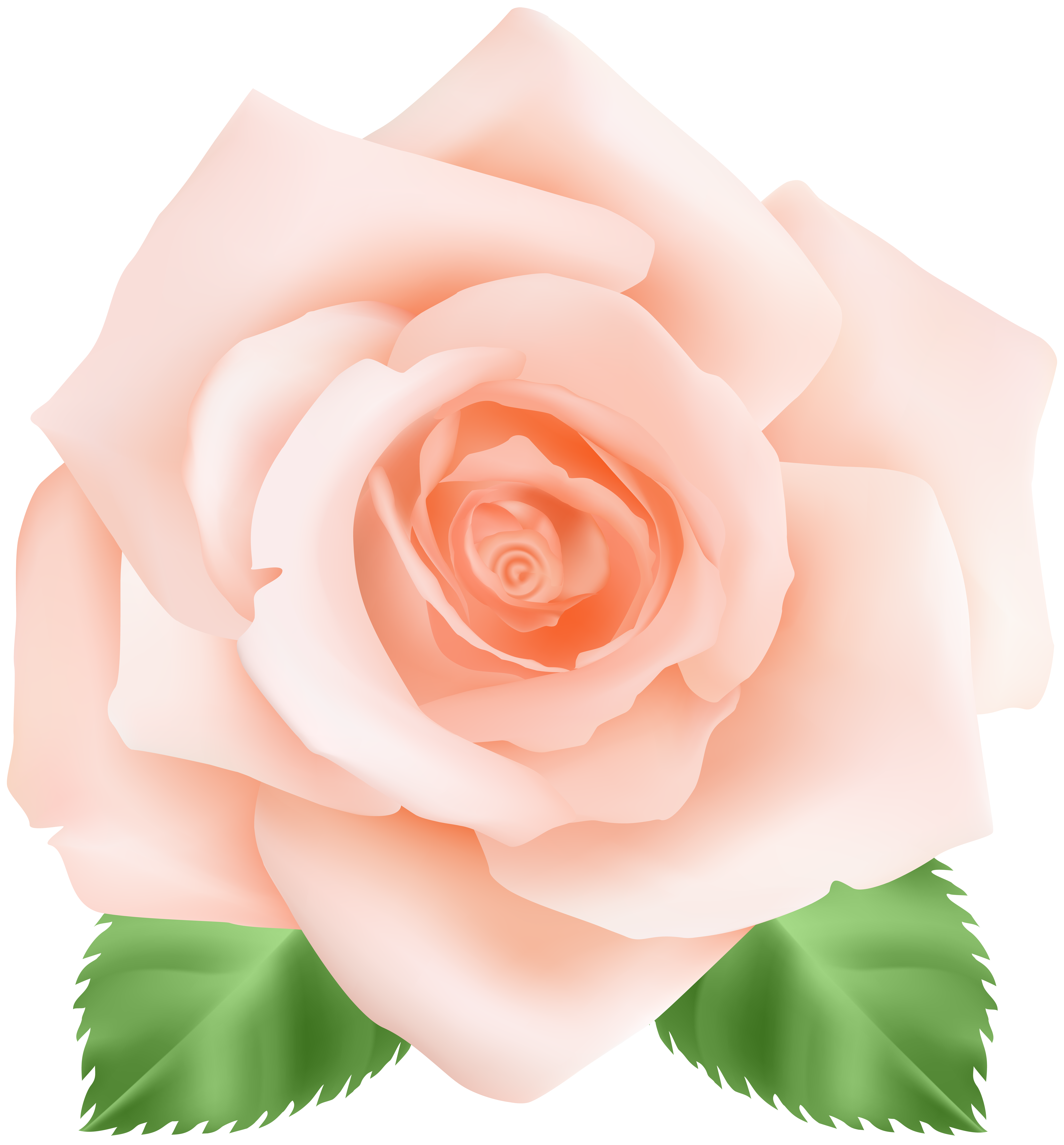 Peach color flower clipart png transparent Peach Rose PNG Clip Art Image | Gallery Yopriceville - High-Quality ... png transparent
