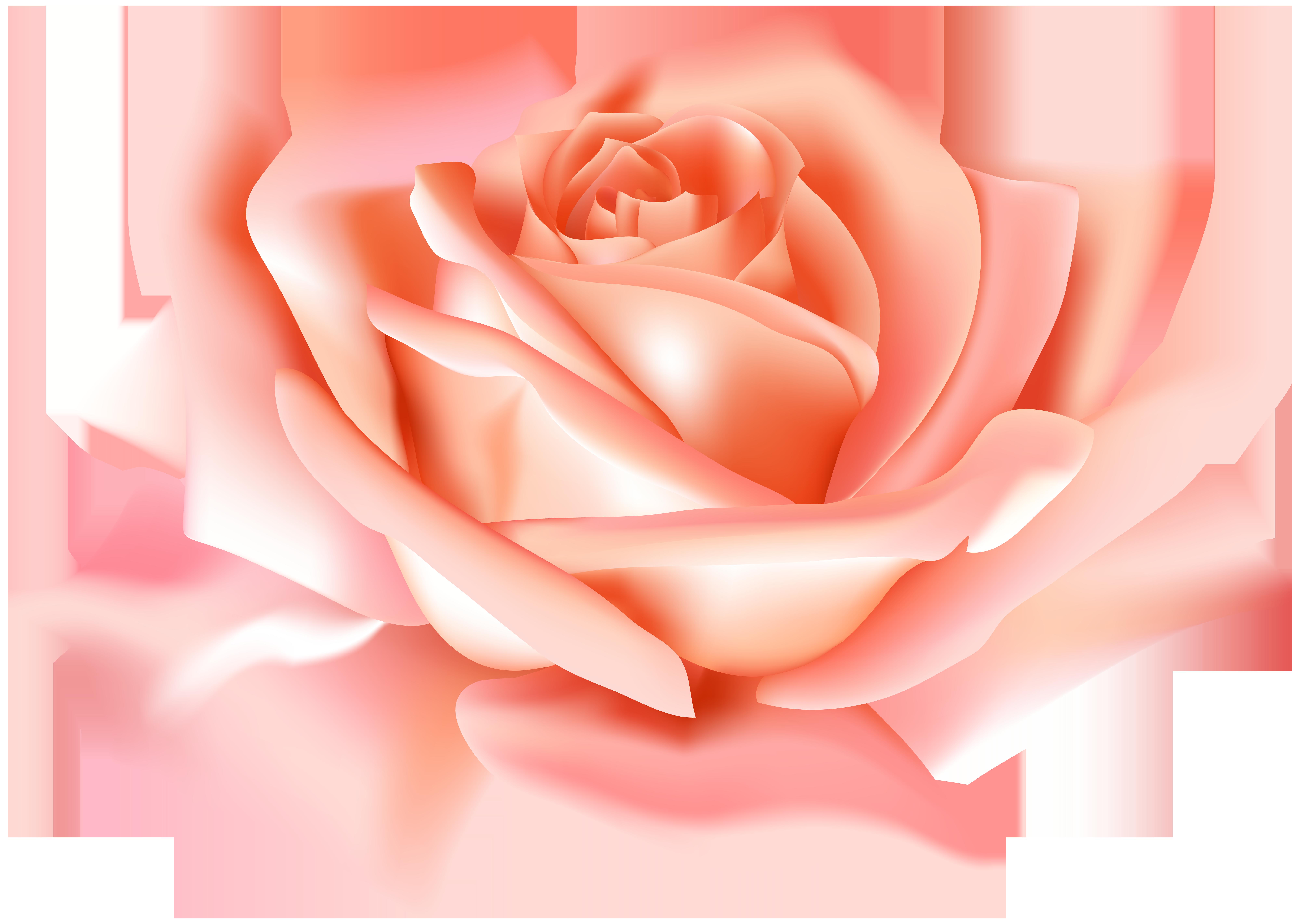 Peach flower clipart svg transparent stock Peach Rose Flower PNG Clip Art Image | Gallery Yopriceville - High ... svg transparent stock