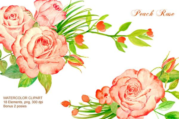 Peach rose clipart clip freeuse library watercolour peach roses, salmon pink roses digital clipart instant download  scrapbook wedding cards greeting cards clip freeuse library