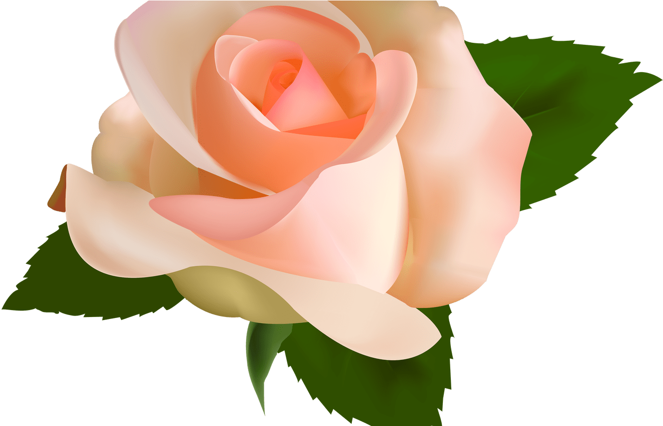 Peach rose clipart image royalty free download Peach Flower Clipart Transparent Pencil And In Color - Peach ... image royalty free download