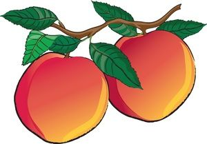 Peaches clipart free library Nectarines Clipart Image - Fresh Nectarines or Peaches still ... free library