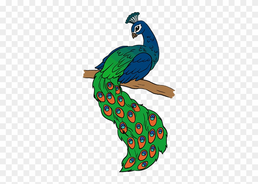 Peacock clipart pictures clip black and white download Peacock Drawing - Drawing Picture Of Peacock Clipart ... clip black and white download
