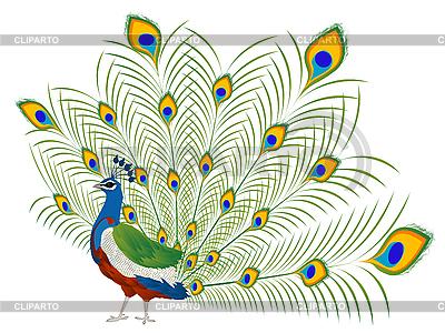 Peacock clipart vector clip art black and white library Peacock | Stock Photos and Vektor EPS Clipart | CLIPARTO clip art black and white library