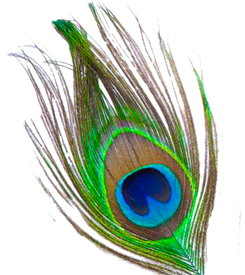 Peacock feather clipart file clip art freeuse stock Peacock Feather PNG Transparent Images | PNG All clip art freeuse stock