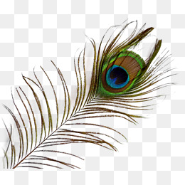 Peacock feather clipart file graphic library library Download Free png Peacock Feather PNG Images | Vectors and ... graphic library library