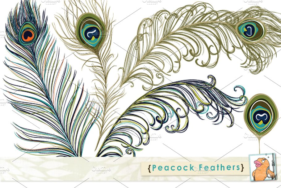 Peacock feathers clipart free library Peacock Feather Clip Art free library
