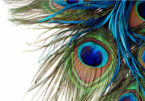 Peacock feathers clipart jpg freeuse stock Details about Peacock Feather Clipart Art 3D Full Wall Mural Photo  Wallpaper Home Decal Kids jpg freeuse stock