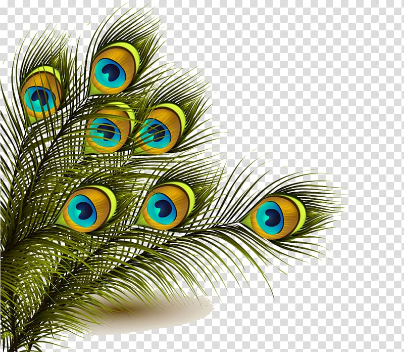 Library Of Peacock Feathers Clipart Transparent Stock Png