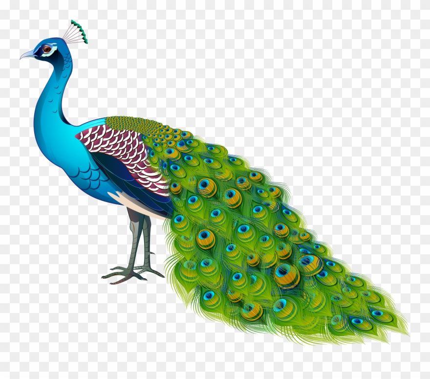 Peacokc clipart svg royalty free Peacock Transparent Image Clipart (#3083403) - PinClipart svg royalty free