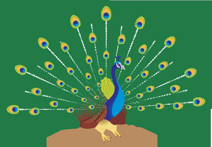 Peacokc clipart clip freeuse library download-Peacock-PNG-transparent-images-transparent-backgrounds ... clip freeuse library
