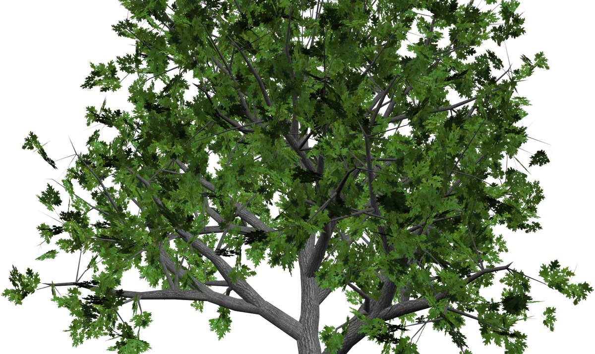 Pecan tree clipart png royalty free stock Sandalwood Tree Clip Art | Wooden Thing png royalty free stock
