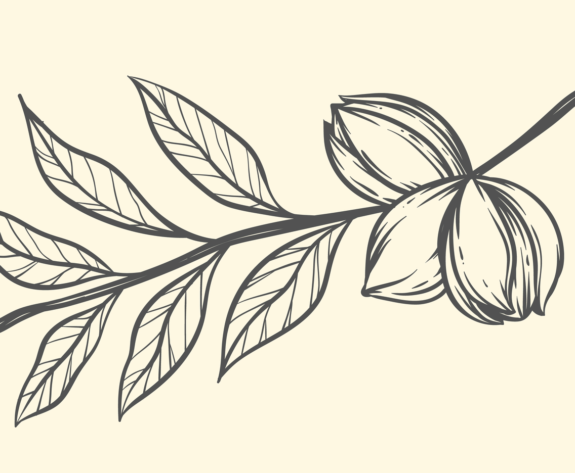 Pecans clipart on a branch black and white clip art royalty free download Pecan On Branch Illustration Vector Art & Graphics ... clip art royalty free download
