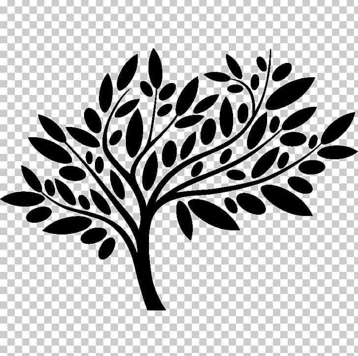 Pecans clipart on a branch black and white svg royalty free Olive Leaf Pecan Grove Family Dentistry PNG, Clipart, Black ... svg royalty free
