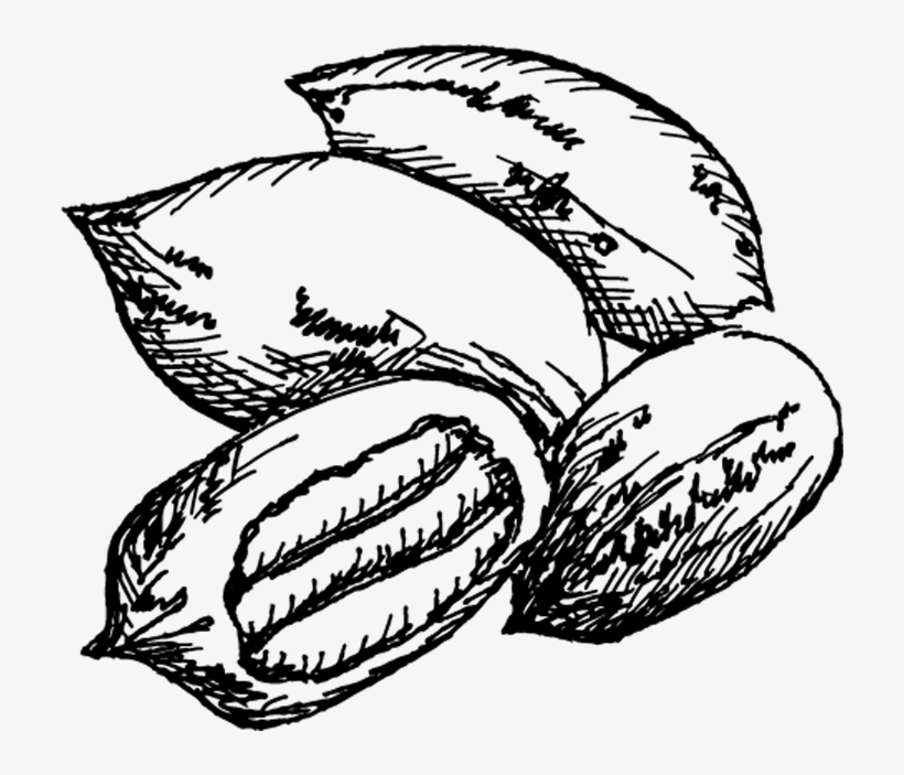 Pecans clipart on a branch black and white image freeuse download Pecan Trees For Sale - Pecan Tree Black And White ... image freeuse download