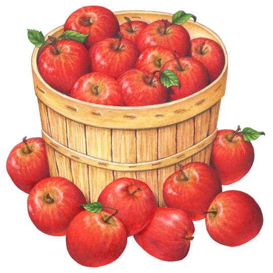 Peck of apples clipart freeuse library Fruit illustration of a bushel basket of red apples with ... freeuse library