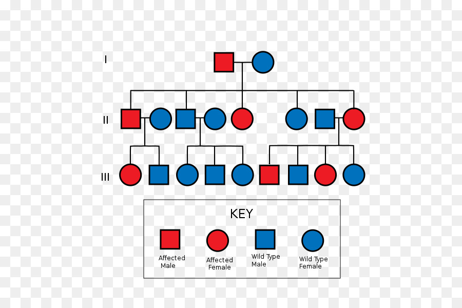 Pedigree logo clipart picture library download pedigree chart clipart Pedigree chart Diagram Genetics ... picture library download