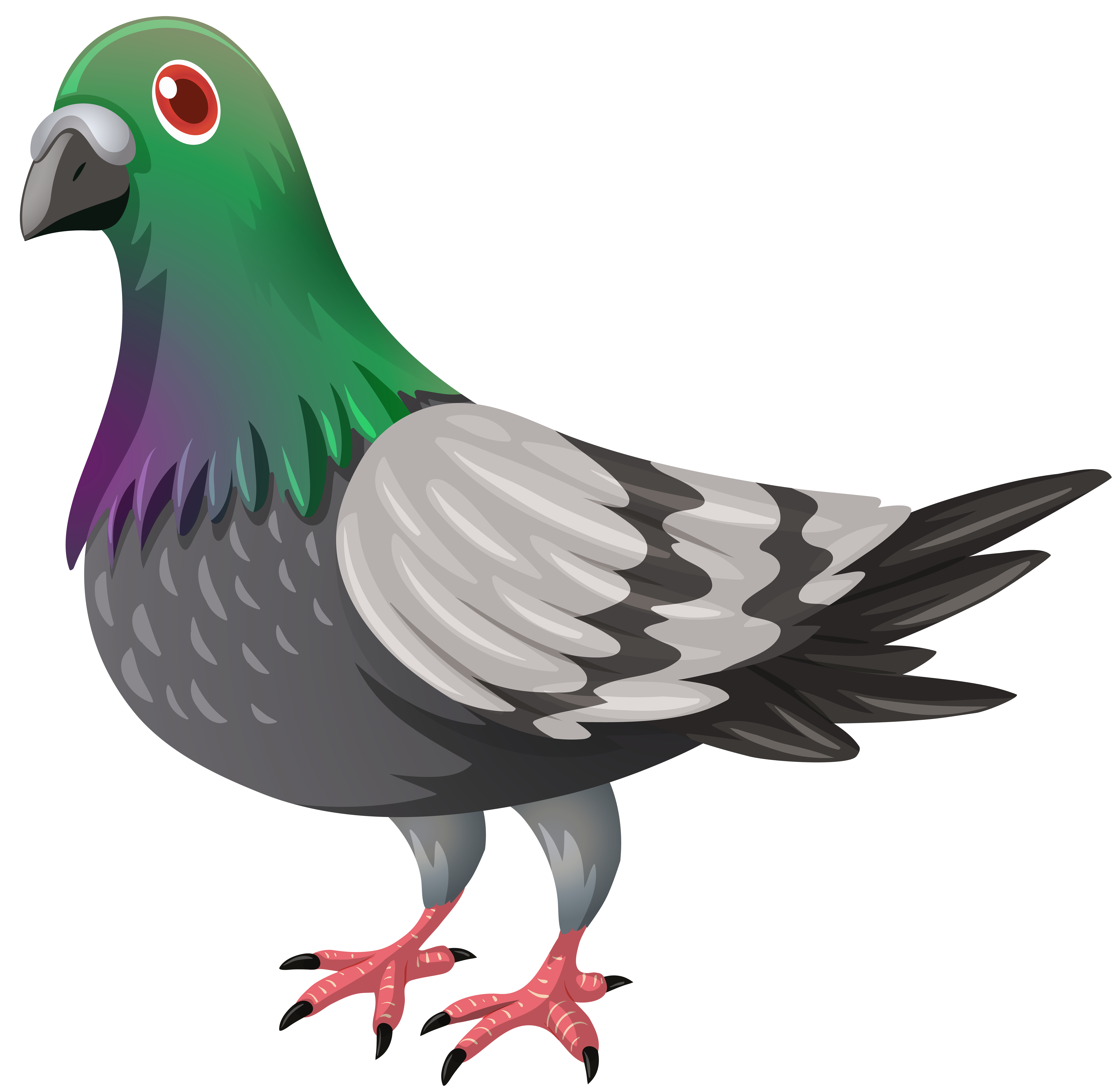 Peigin clipart jpg black and white Pigeon Transparent PNG Image | Gallery Yopriceville - High-Quality ... jpg black and white