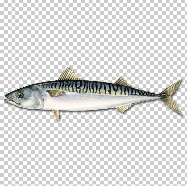 Pelagic fish clipart royalty free stock Atlantic Mackerel Pelagic Fish Atlantic Bluefin Tuna PNG, Clipart ... royalty free stock