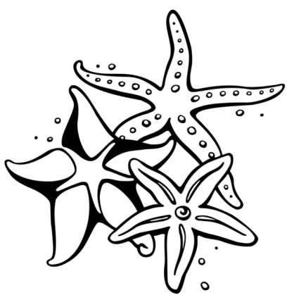 Pencil starfish clipart clip freeuse Free Starfish Drawing Cliparts, Download Free Clip Art, Free ... clip freeuse