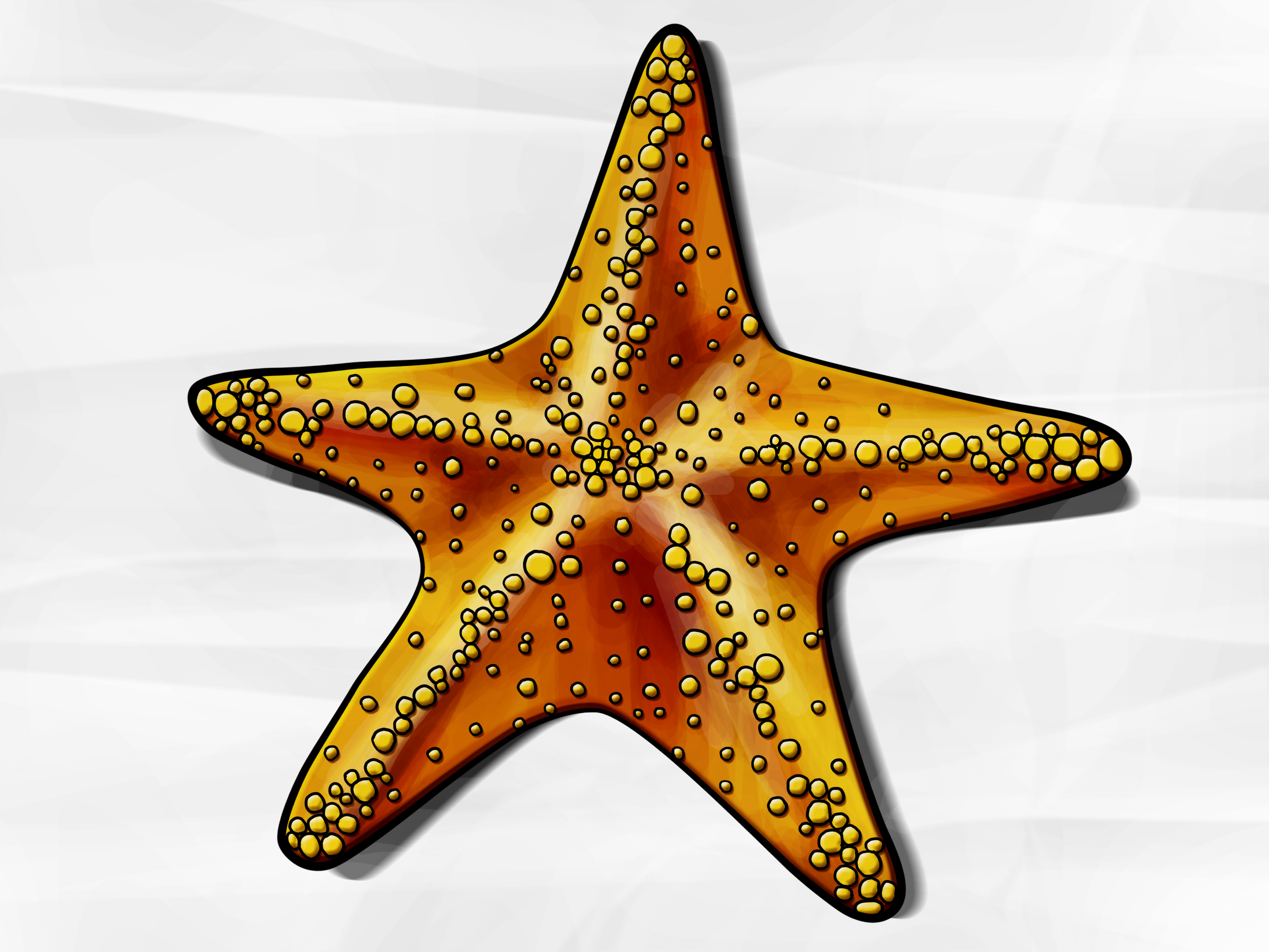 Pencil starfish clipart royalty free download How to Draw a Starfish: 6 Steps (with Pictures) - wikiHow royalty free download