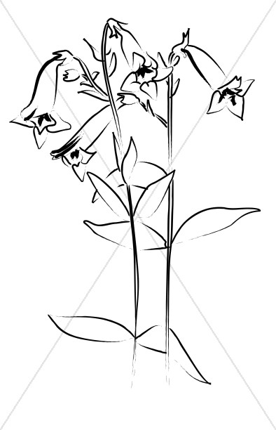 Penstemon clipart free library Penstemon from the Garden | Church Flower Clipart free library