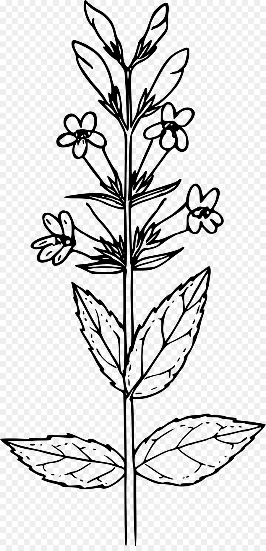 Penstemon clipart graphic download Black And White Flower clipart - Tshirt, Flower, Leaf ... graphic download