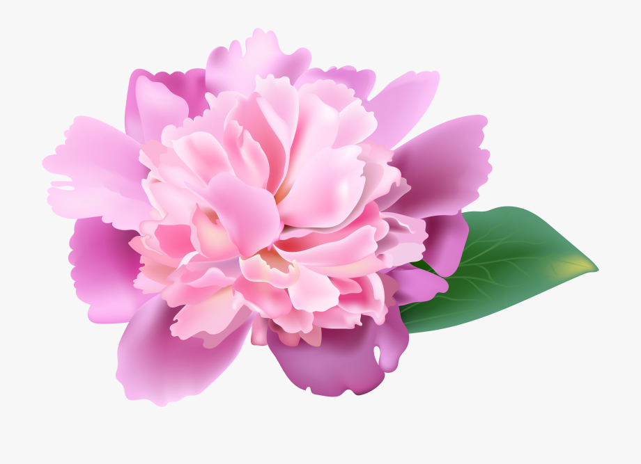 Peonies flower clipart png black and white download Peonies Clipart Realistic - Transparent Pink Peonies Clip ... png black and white download