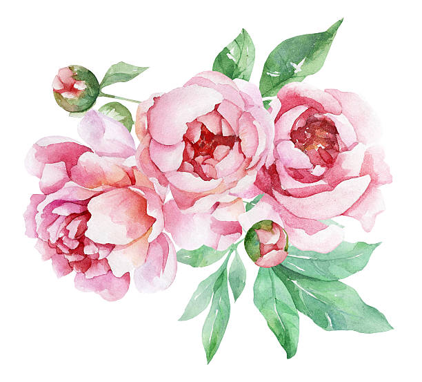 Peonies flower clipart free download Peony flower clipart 1 » Clipart Station free download