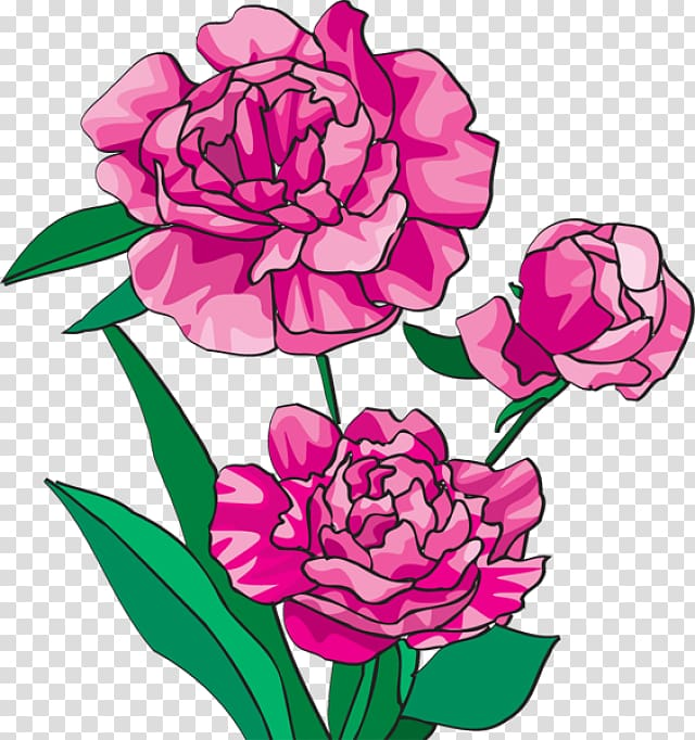 Peonies flower clipart banner freeuse Arranging cut flowers Caribbean Flowers Peony , Peonies ... banner freeuse