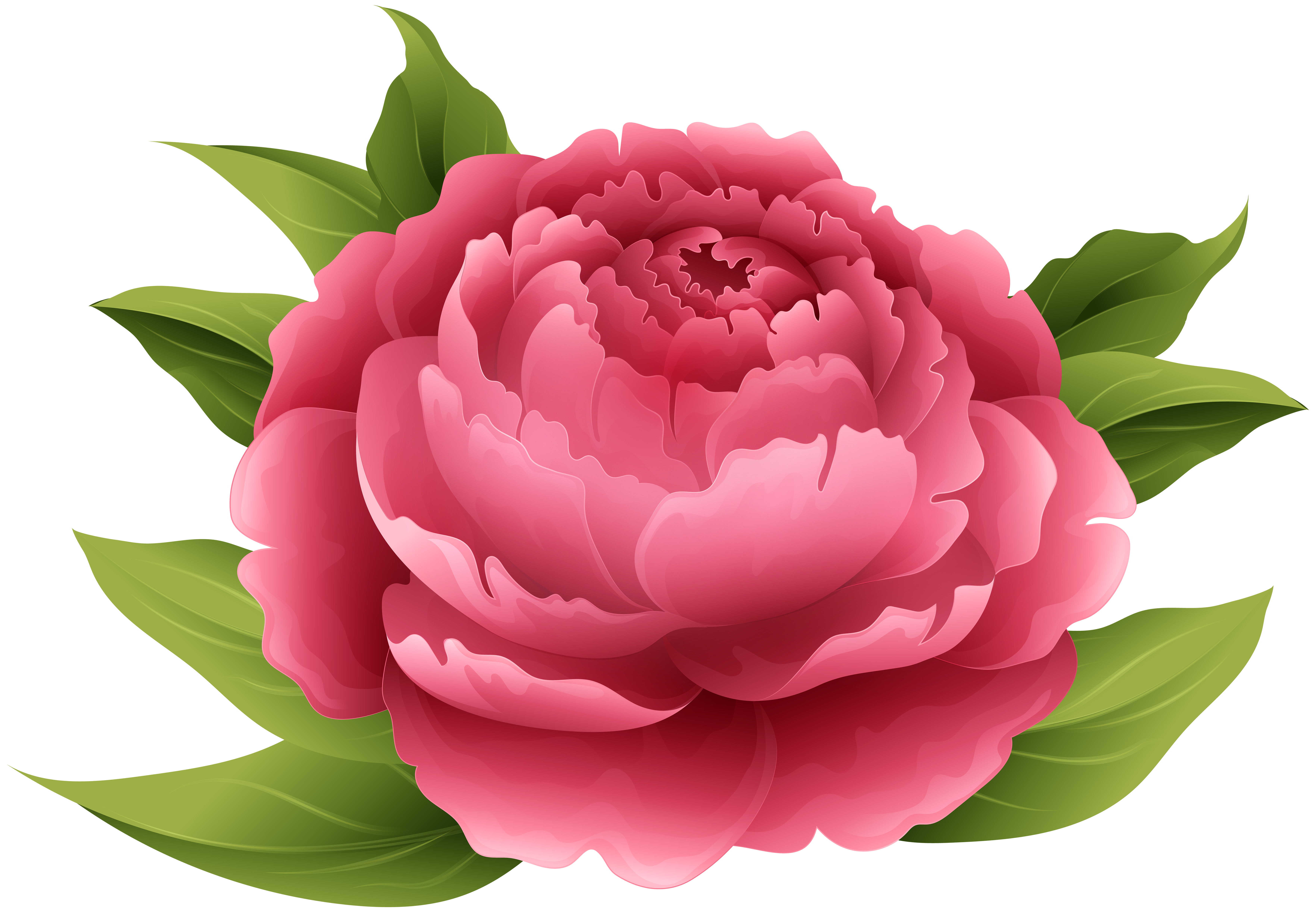 Peony crown clipart free download 19 Peony clipart HUGE FREEBIE! Download for PowerPoint presentations ... free download