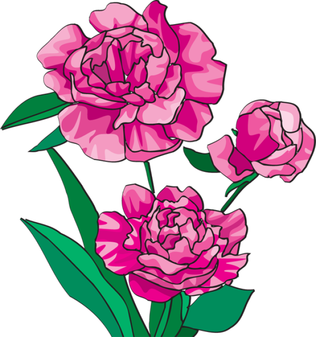 Peony crown clipart png black and white stock 19 Peony clipart HUGE FREEBIE! Download for PowerPoint presentations ... png black and white stock