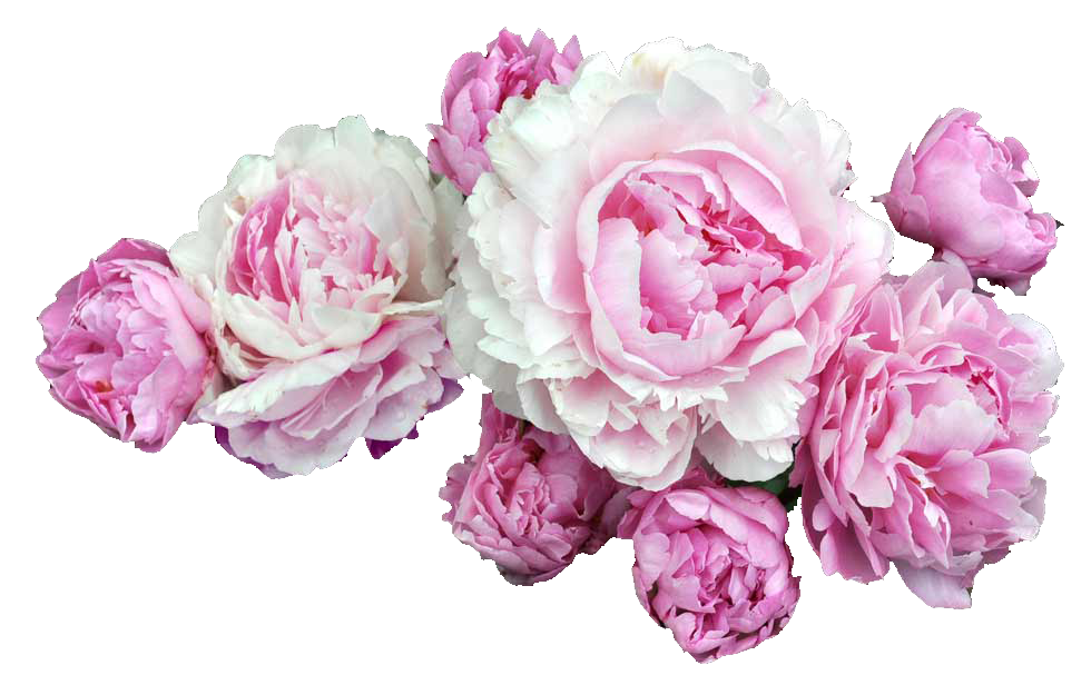 Peony crown clipart clipart royalty free download transparent tumblr - Pesquisa do Google | Transparents/Overlays ... clipart royalty free download