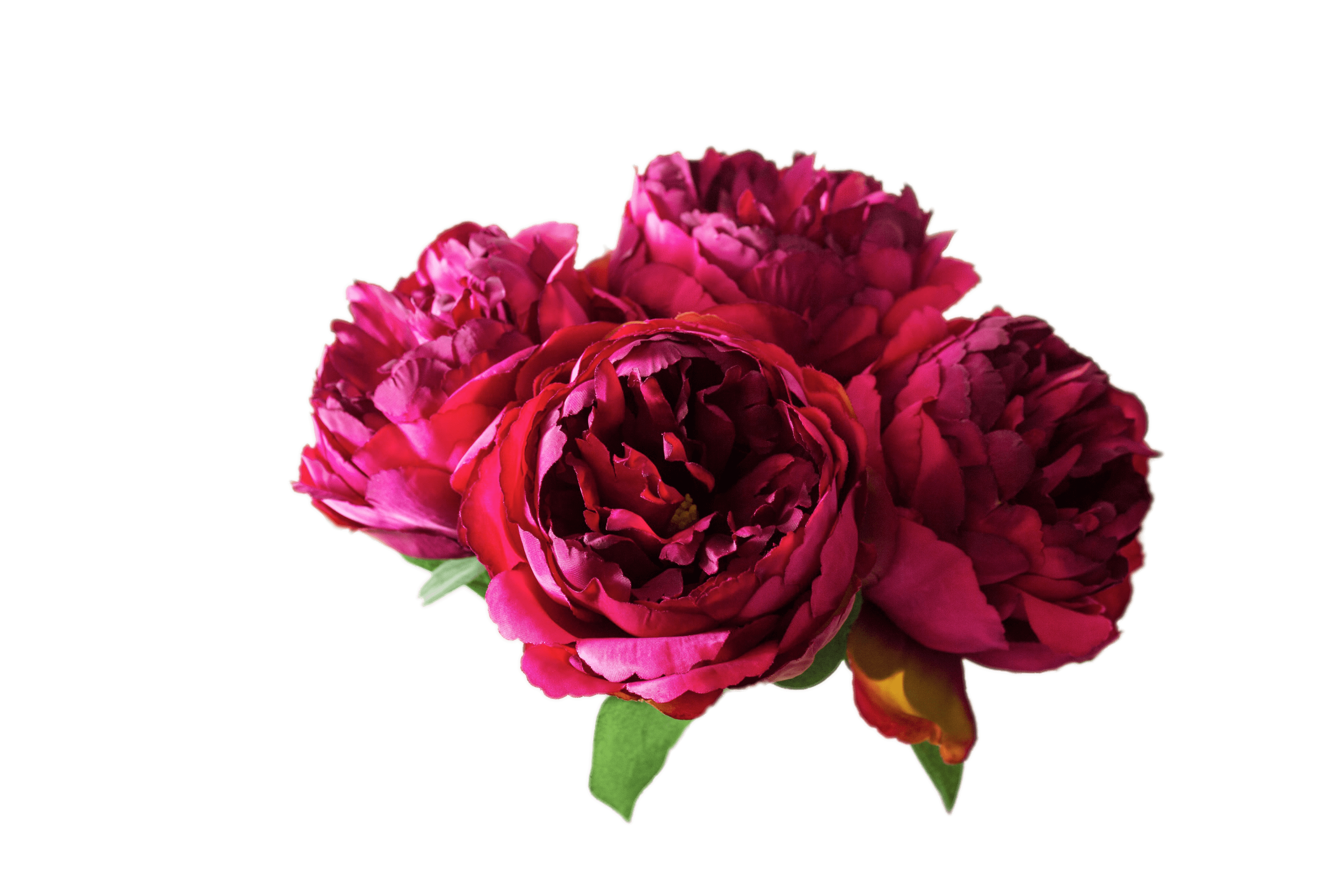 Peony flower clipart freeuse download Peonies transparent PNG - StickPNG freeuse download