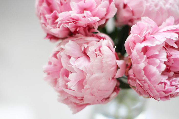 Peony season banner download Peony Season — L Brook Events: Award Winning Wedding Planning and ... banner download