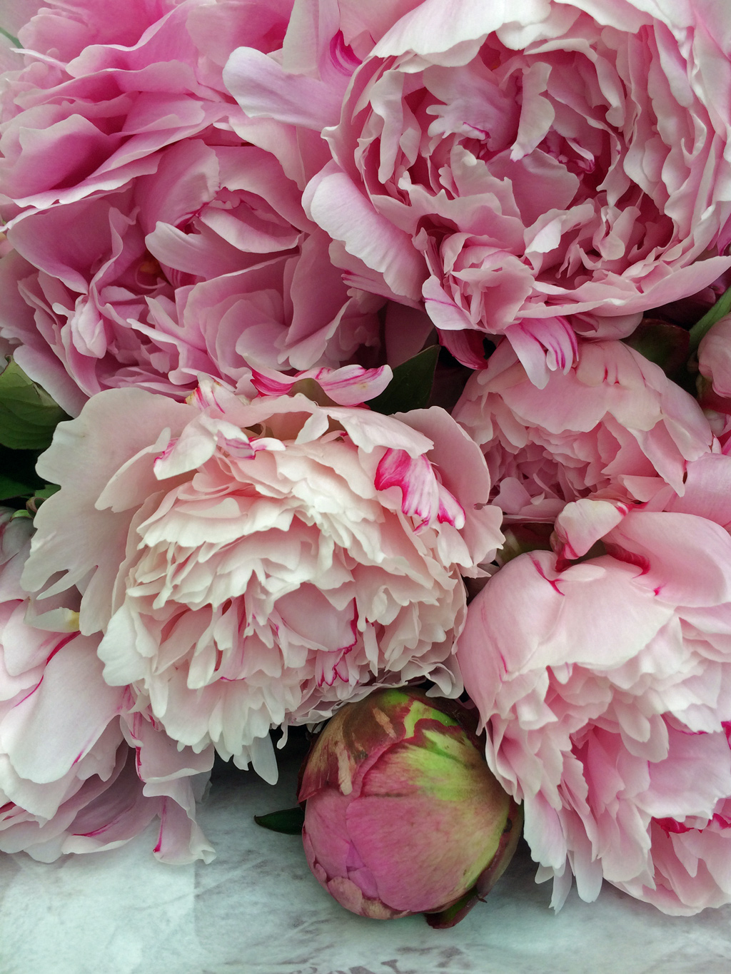 Peony season clip art royalty free library Peony season is here! – Susan Rushton clip art royalty free library