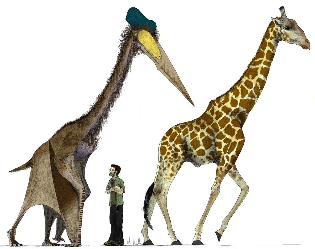 People on top of a pterodactyl clipart image free stock Top 10 Bizarre Prehistoric Animals   Pterosaurs etc ... image free stock
