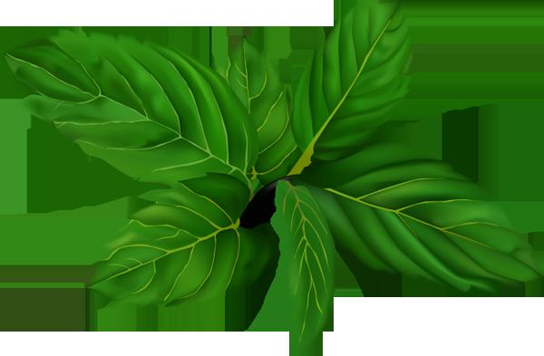 Peppermint plant clipart