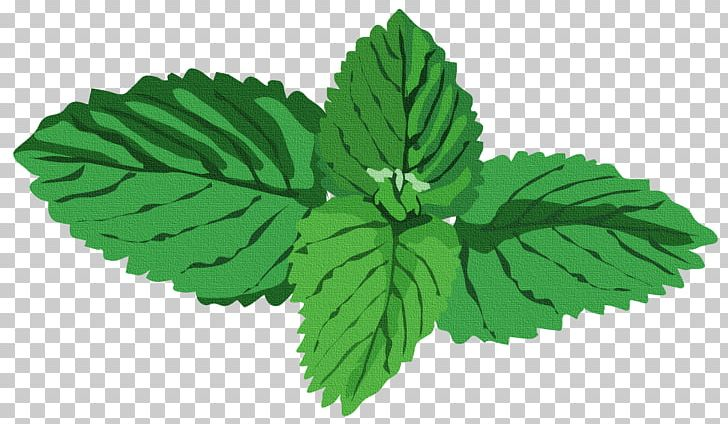 Peppermint plant clipart picture freeuse Peppermint Herb Water Mint Basil PNG, Clipart, Agonis ... picture freeuse