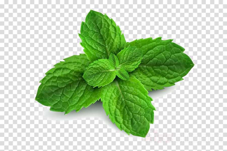 Peppermint plant clipart graphic freeuse Download peppermint png clipart Peppermint graphic freeuse