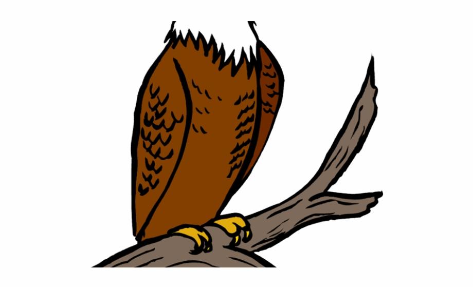 Perched clipart download Bald Eagle Clipart Perched - Eagle Clipart Free PNG Images & Clipart ... download
